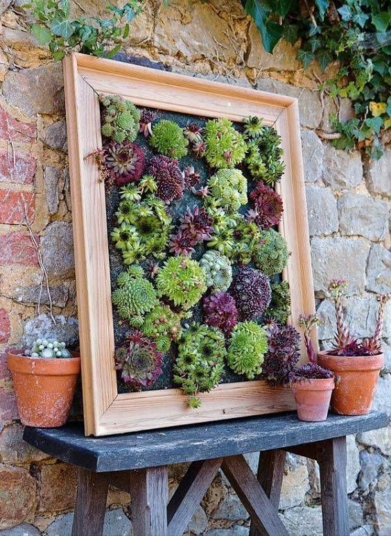 jardin vertical suculentas
